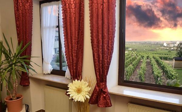 Blick Richtung Rheinebene aus dem Wohnzimmerfenster - Ferienwohnung Silvaner, Ferienhaus Winzerhof, Neustadt / Weinstraße, Weindorf Haardt
